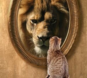 lion-kitten-mirror